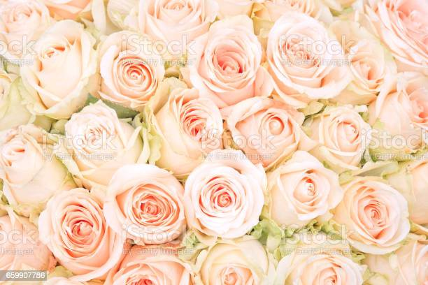 White roses as a background picture id659907786?b=1&k=6&m=659907786&s=612x612&h=jgndujcnj mzv 3mhyugbgjtgn87ze9t2ve zyzs 8c=