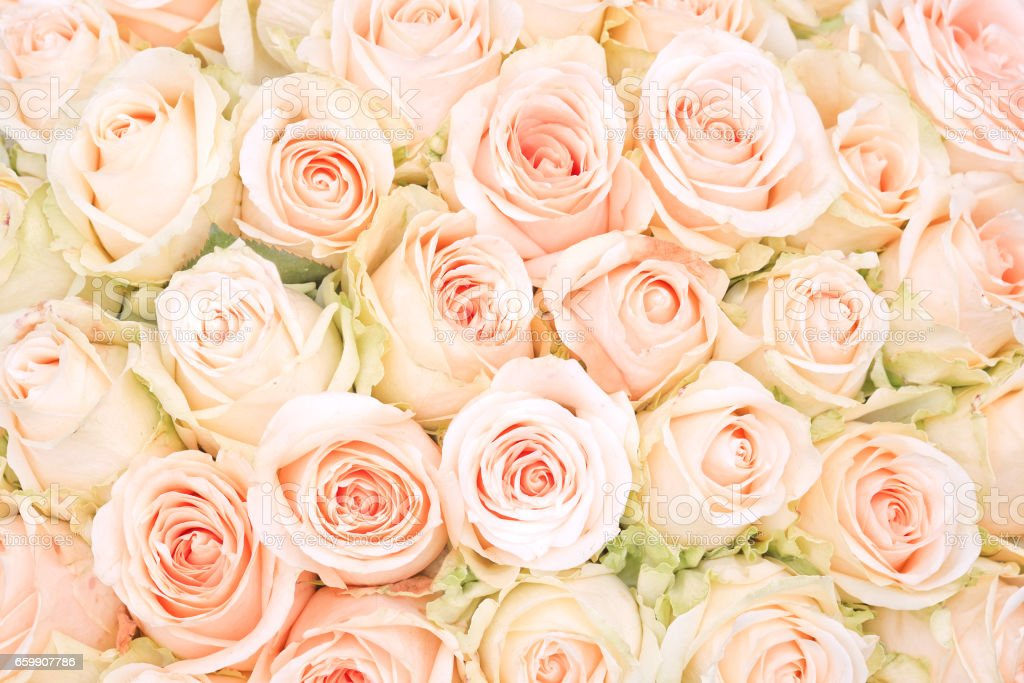 white roses as a background – Foto