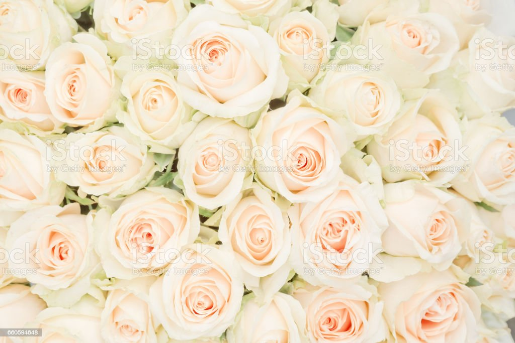 white roses as a background stock photo