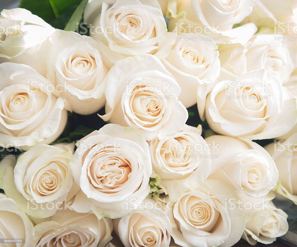White roses background. Nature, flowers, bouquet stock photo