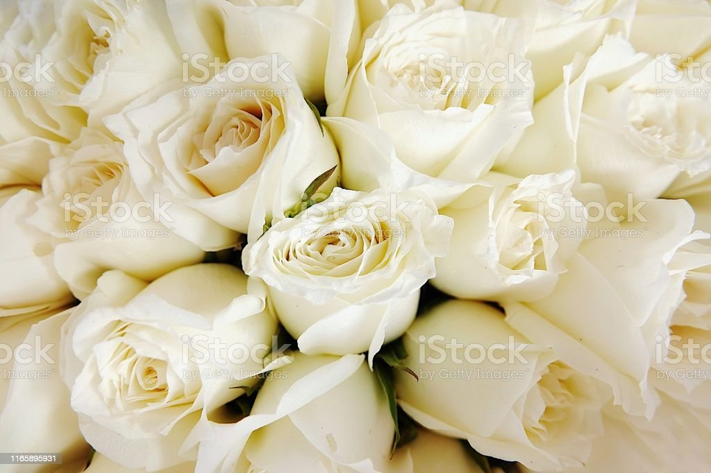 White roses floral Background flowers closeupTexture of delicate rose...