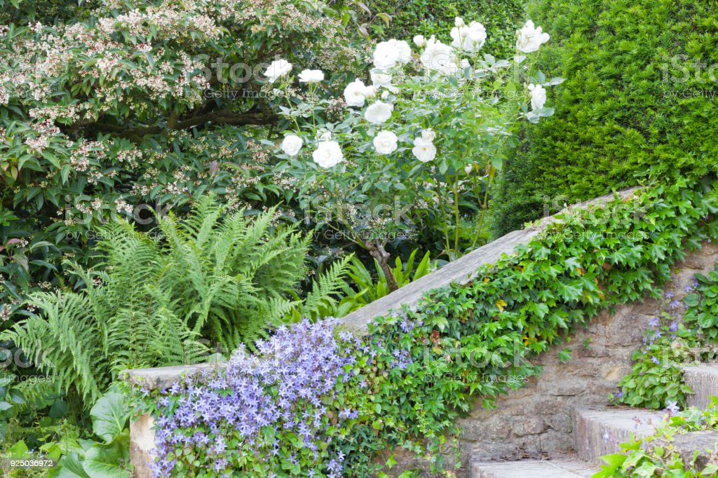 White roses, green  fern, blue flowers and ivy on a stone staircase, in a summer garden . stock photo