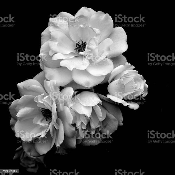 White roses in black and white picture id599689030?b=1&k=6&m=599689030&s=612x612&h=2vuh n fkbxnxlhsfstvkn7qh41qzkbedzynnayutj8=