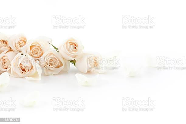 White roses laying down picture id155287784?b=1&k=6&m=155287784&s=612x612&h=yvxh524aypb3wka63gge51cb8vsqexvh8te6a9f1yhc=