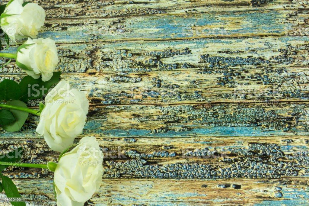 White roses on a colored wooden background royaltyfri bildbanksbilder