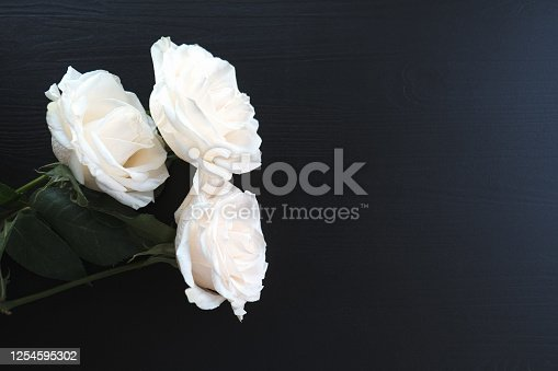 white roses on a dark wooden background, place for text with white roses