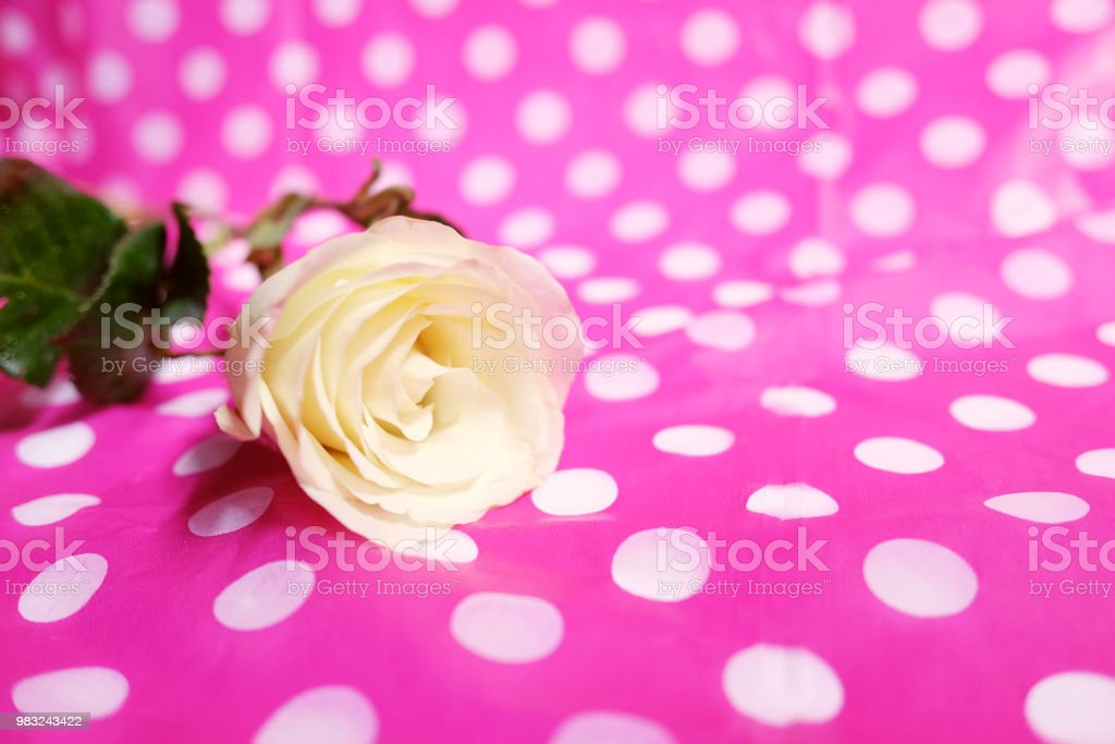 White Roses On Pink Color Poka Dot Fabric Tablecloth Background Use