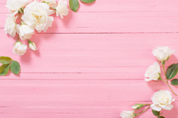 White roses on pink wooden background picture id1255551068?b=1&k=6&m=1255551068&s=612x612&w=0&h=bbvx5syiaiwu60uoskl50cvxqu4csd9zikdw8hy pmi=