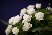 White roses on purple