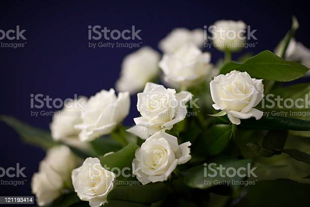 White roses on purple picture id121193414?b=1&k=6&m=121193414&s=612x612&h=2qelwxsauf8zq4k0wthziyvptgpojbmcdivt9t7dhio=