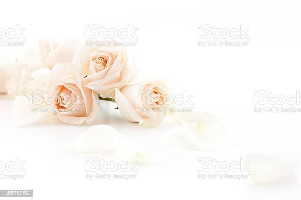 White roses picture id155282561?b=1&k=6&m=155282561&s=612x612&h=xro1qek7mjwnkj ex9zwu3pfdhtucfve be3mzhxlsc=