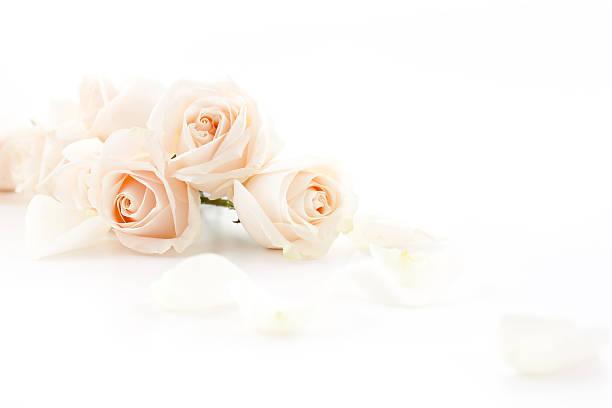 White roses picture id155282561?b=1&k=6&m=155282561&s=612x612&w=0&h=0mtthilw937wsc9suhj7vtm 69ikdd94oml0 wottfy=