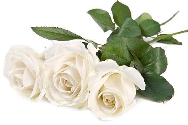 white roses - meerdere lagen effect stockfoto's en -beelden