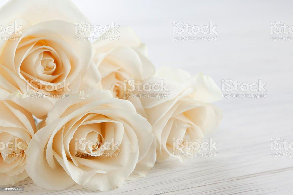 Weiße Rosen – Foto