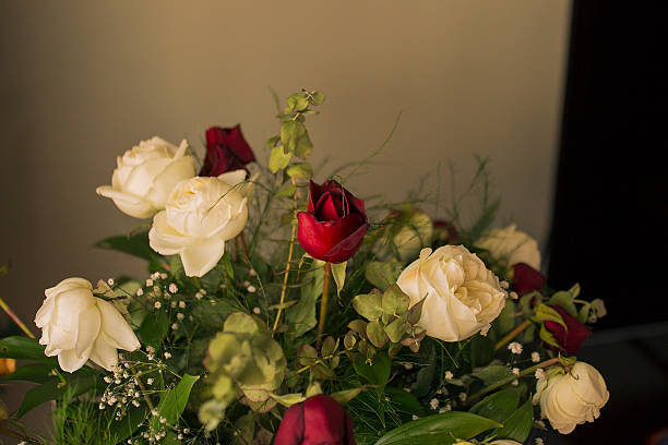 white roses - byakkaya stok fotoğraflar ve resimler
