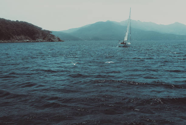 white sail boats racing in a blue sea stock photo