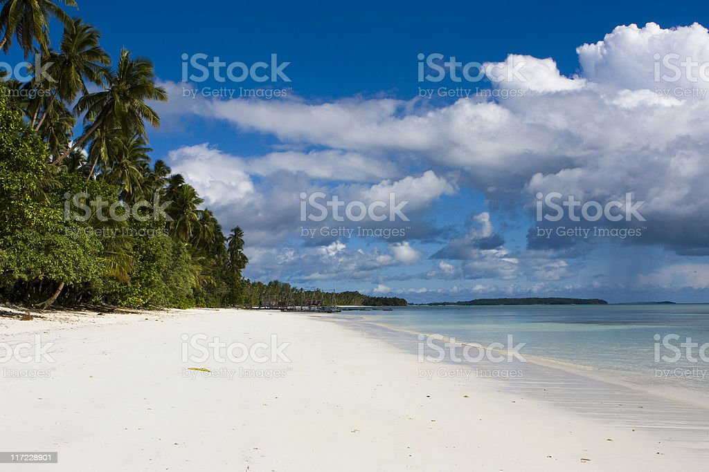 White sand beach and palm trees royalty-free stock photo