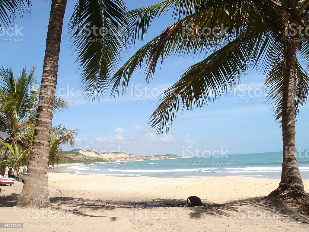 white sand beach and two palms royalty-free stock photo