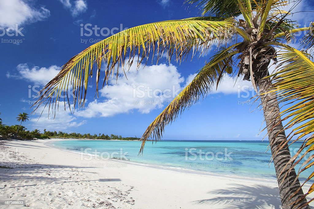White sand beach with blue ocean, blue sky and palm trees stock photo