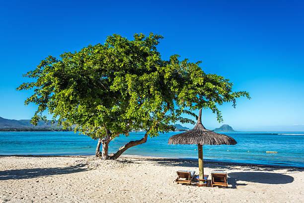plage de sable blanc avec chaises longues et de parasols, île maurice - tamarin photos et images de collection