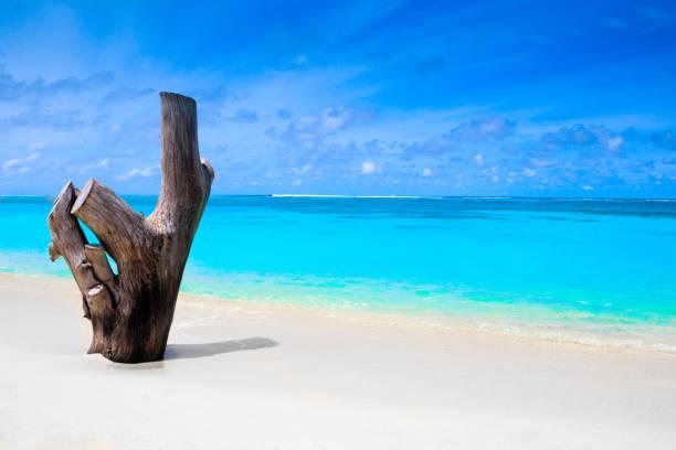 weißen sand-strand mit stumpf und türkis meer - die toteninsel stock-fotos und bilder
