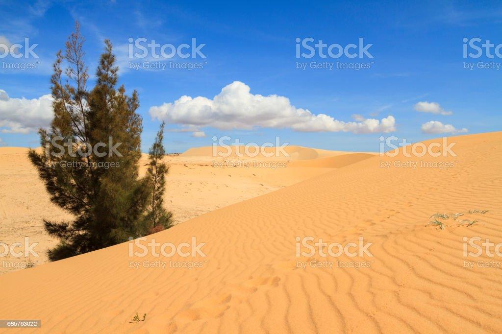 white sand dunes zbiór zdjęć royalty-free