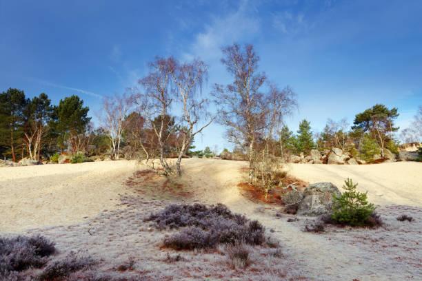 sable blanc de la forêt de Fontainebleau - Photo