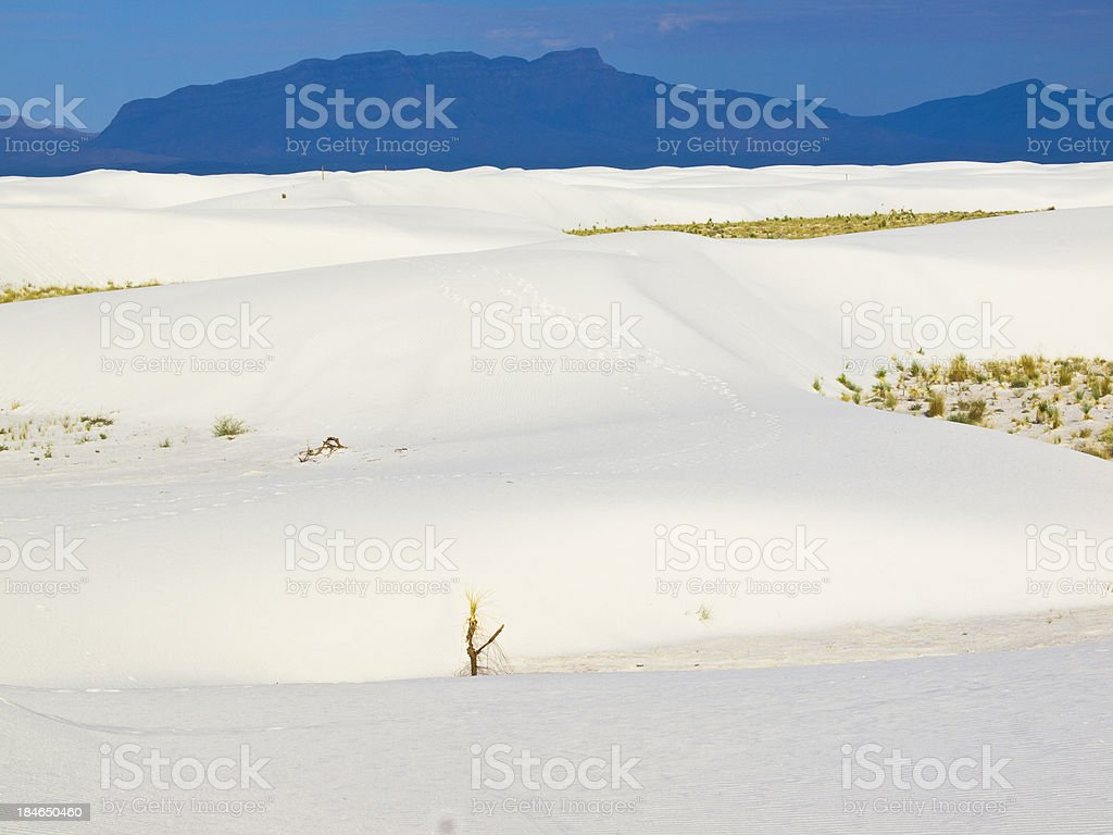 White sands morning royalty-free stock photo