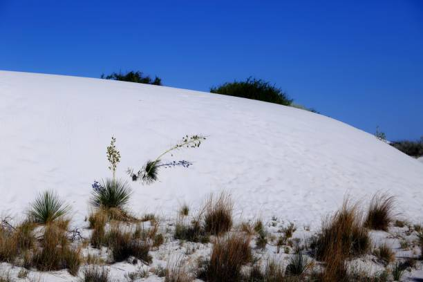 White Sands National Monument in New Mexico, USA stock photo