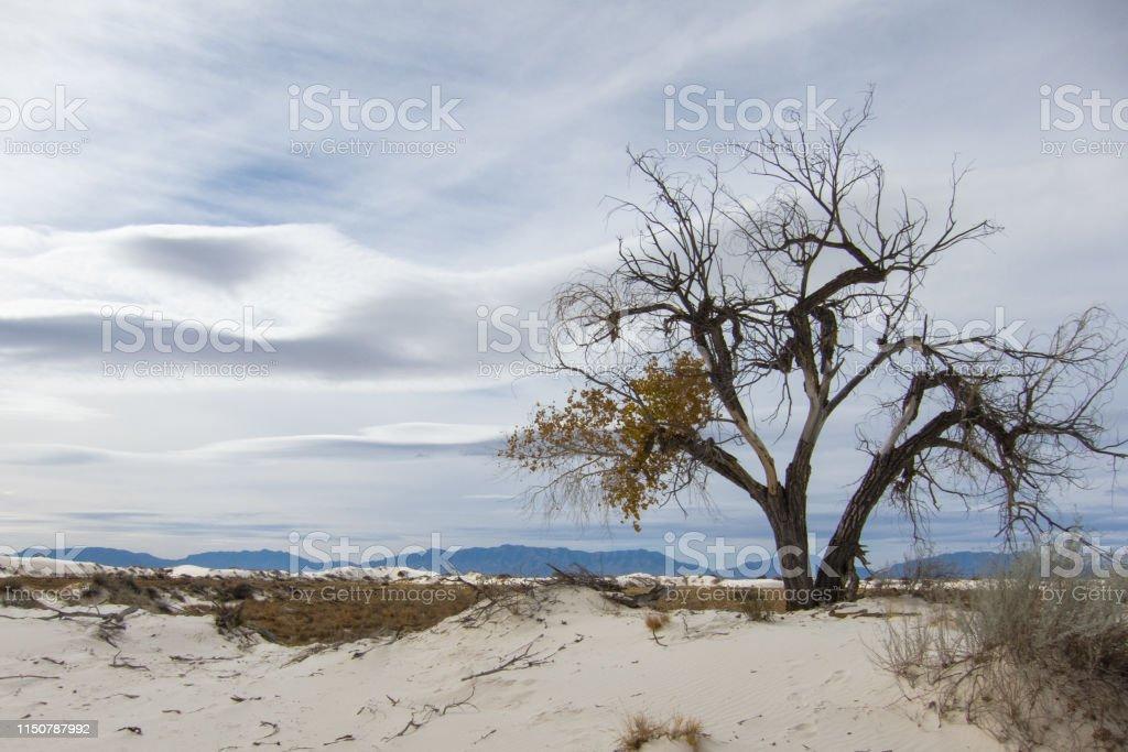 White Sands, New Mexico - Royalty-free Desert Stock Photo
