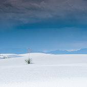 White Sands National Park, New Mexico, U.S.A.