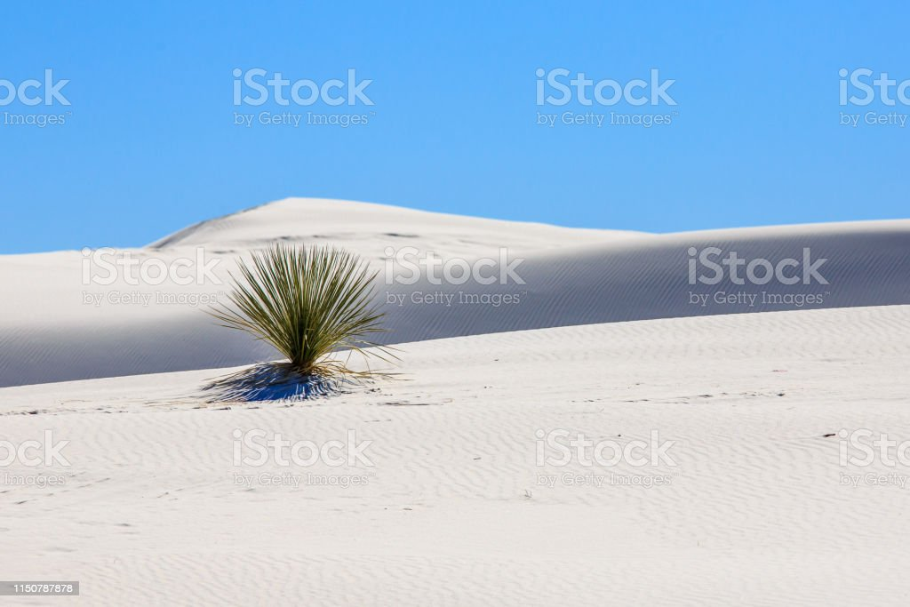 White Sands - Royalty-free Cactus Stock Photo