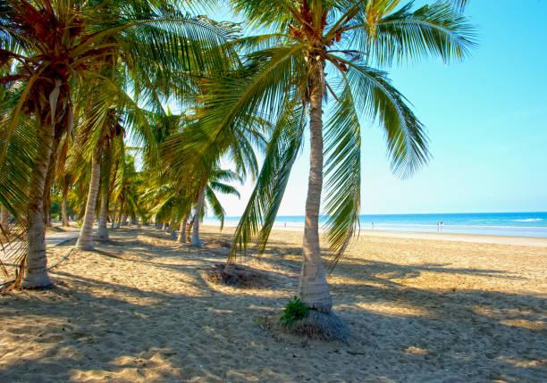 """weißen sandigen strand von oman. meer, palmen, sauberen sand."""" n - maskat stock-fotos und bilder"""