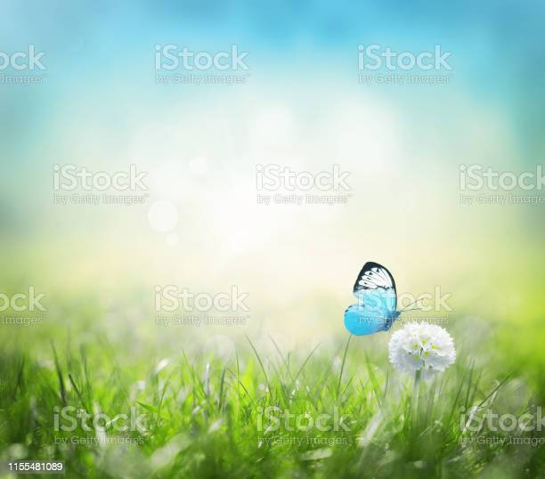 White scope flowers with green grass background and butterfly picture id1155481089?b=1&k=6&m=1155481089&s=612x612&h= gbvrpywhriodta6nv8rzqgb4wgy k0cmr10kazmsog=