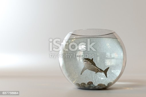 istock White shark into a fishbowl 637758664