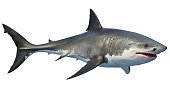 White shark marine predator big. 3D rendering