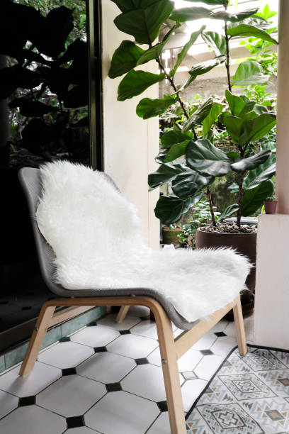 White sheepskin on easy chair with vintage rug and fiddle leaf fig tree in pot. stock photo