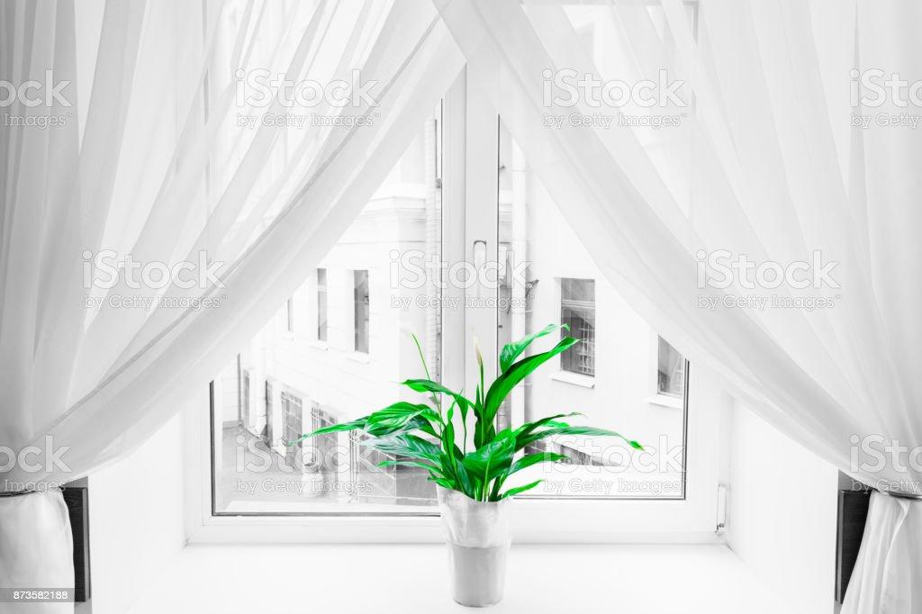 Weiße schiere Vorhang Textur Hintergrund in Tageslicht Atmosphäre der Wohnung des innen- und grüne Blume im Blumentopf auf der Fensterbank. Schwarz / weiß-transparente Vorhang Hintergrund. Vorhang aus einem leichten Stoff, der das Licht in einem Raum filtert. – Foto