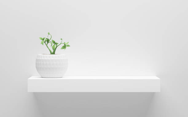 white shelf with green potted plant on wall with light from the top stock photo