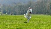 Im Sonnenlicht stürmt ein Hund heran