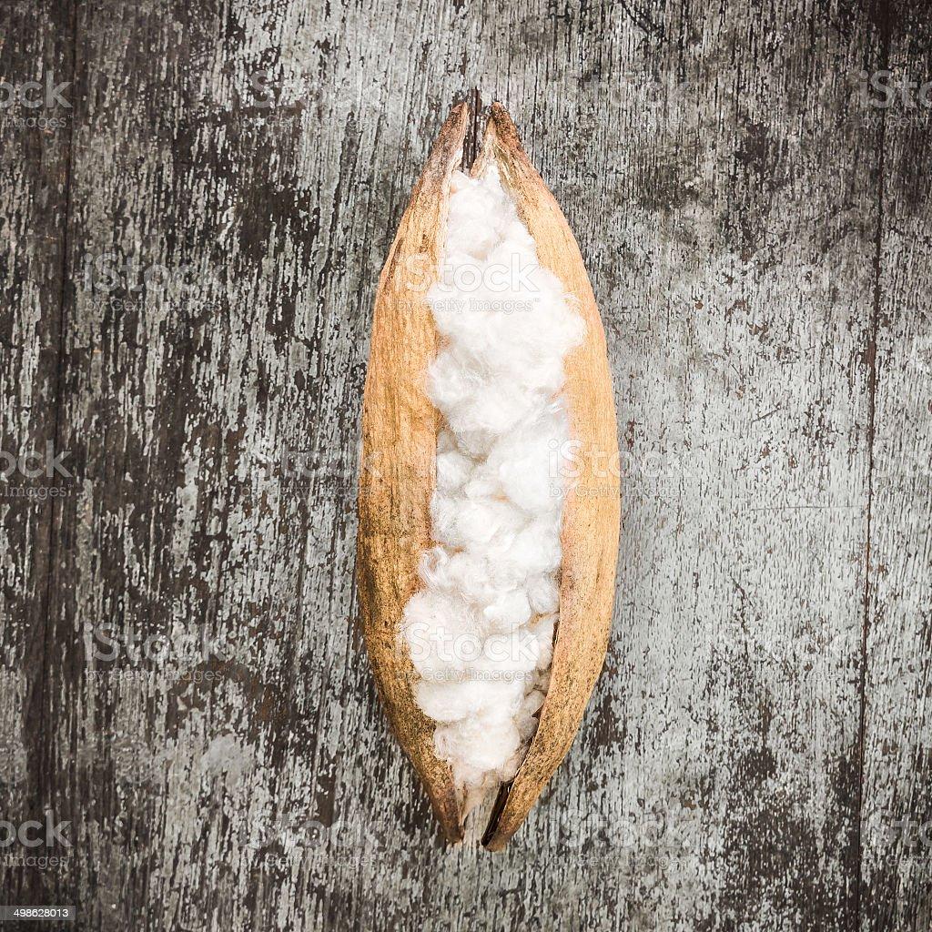 White silk cotton stock photo