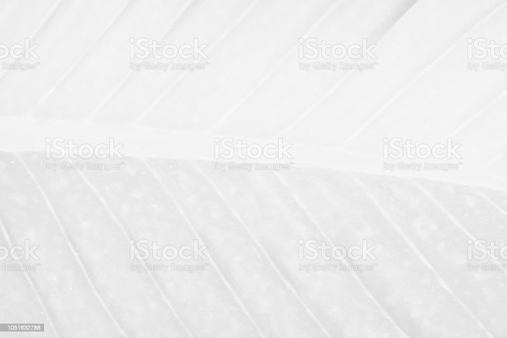 White Silver background texture glitter sparkle for christmas elegant light design shiny abstract painted vintage blurred magic winter wallpaper stock photo