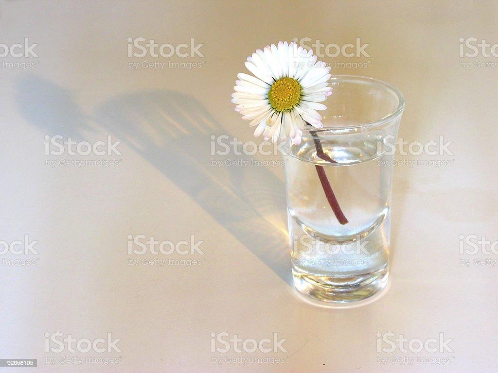 White simplicity stock photo