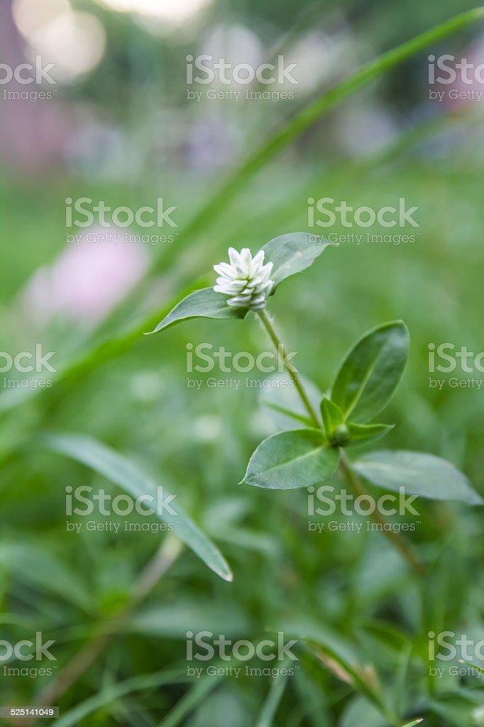 white small flowers stock photo