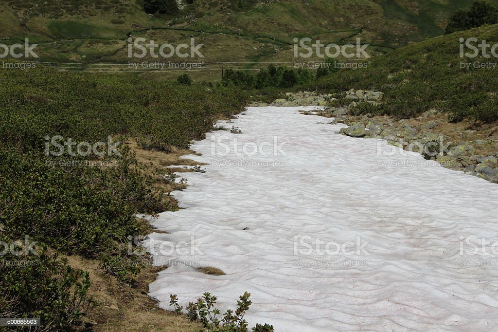 White Snowfield and Green Rhododendron in the Austrian Alps stock photo