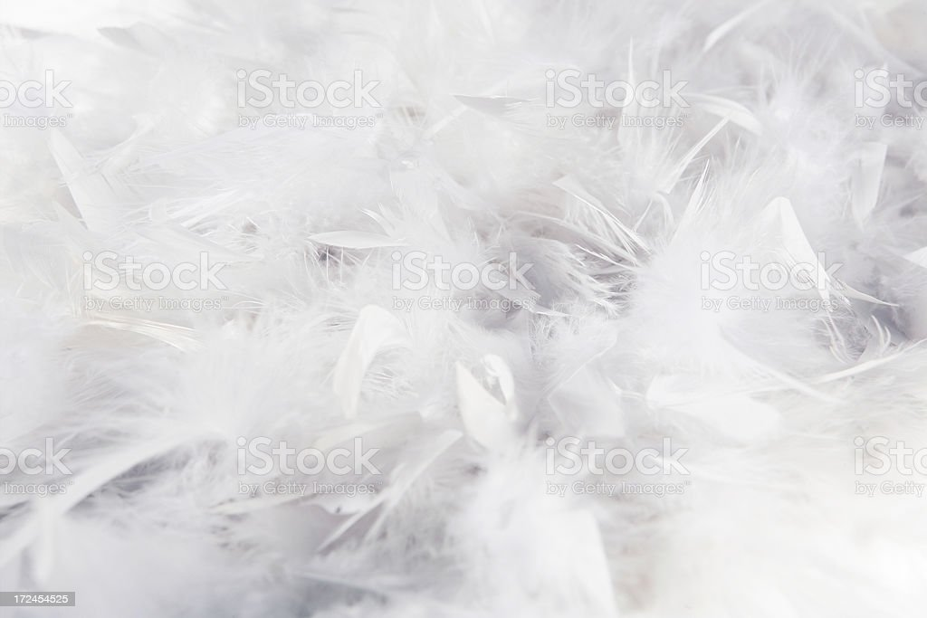 white soft feather background stock photo