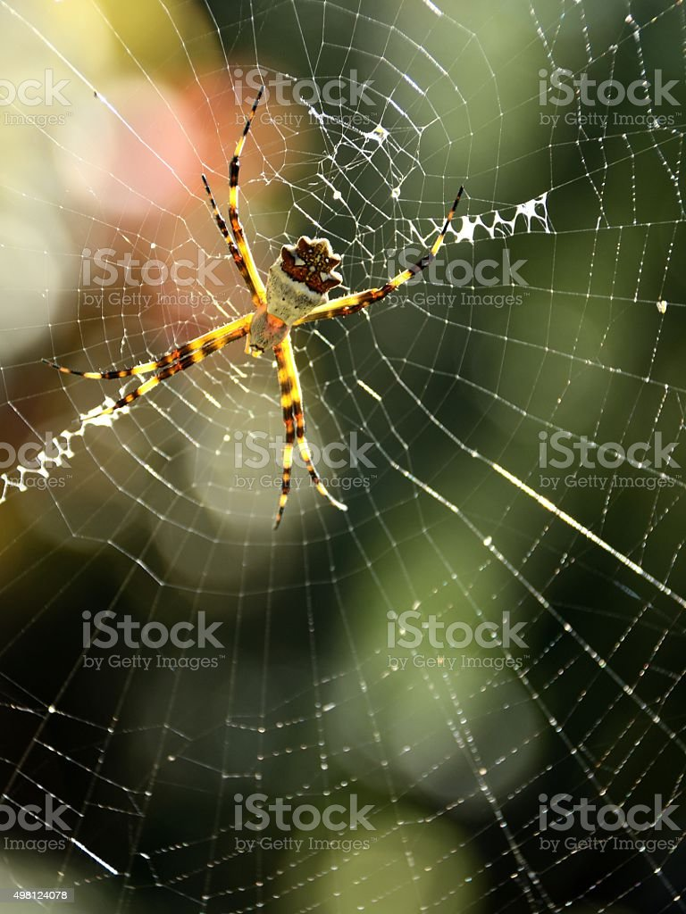 White spider on the web stock photo