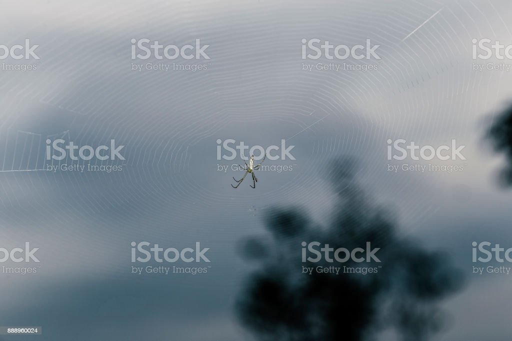 White spider on the web with blurred background of tree. stock photo