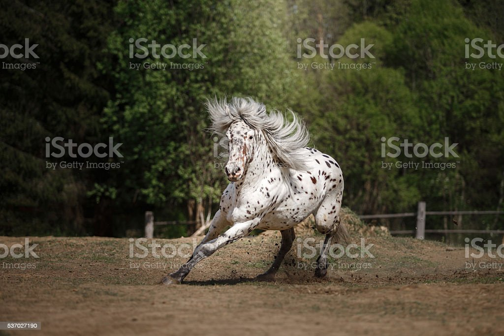 White spotted horse on nature stock photo