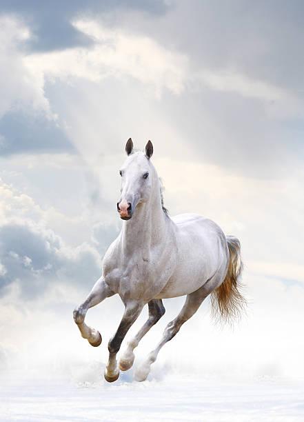 white stallion white stallion under cloudy sky stallion stock pictures, royalty-free photos & images